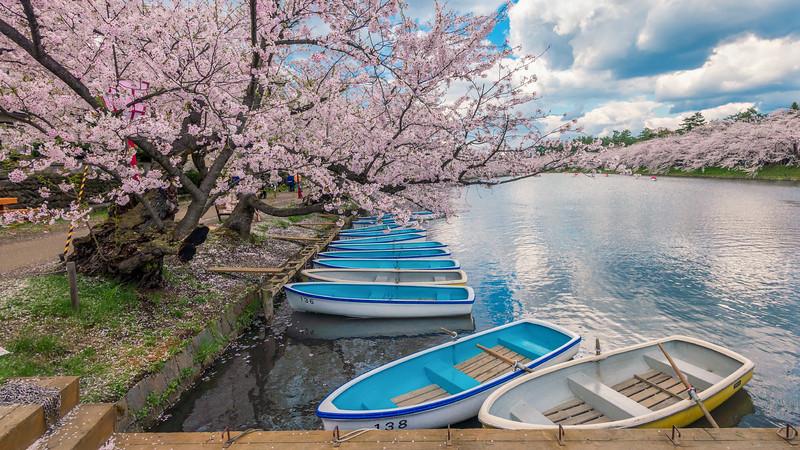 Boats and Blossoms at Hirosaki Castle Park