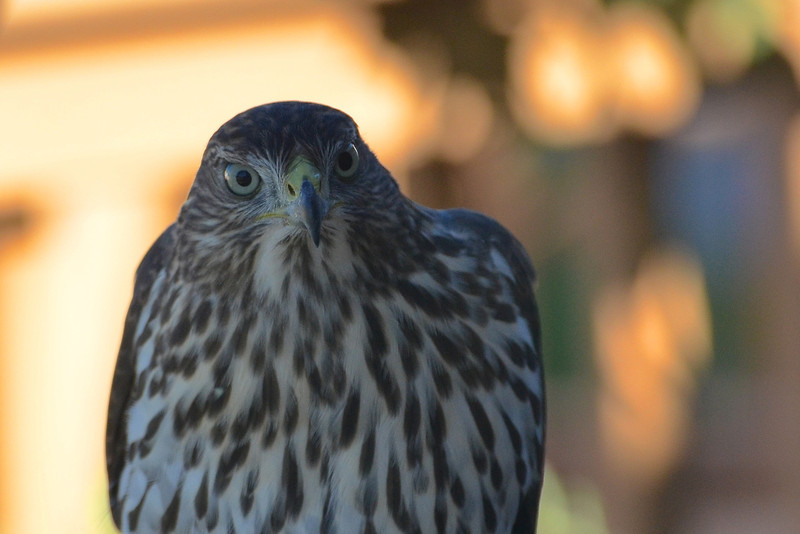 Botanic Gardens & Birdwatching Galleries