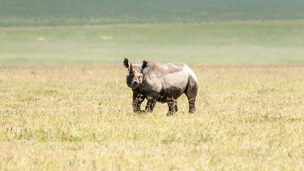 Ngorongoro aka Garden of Eden