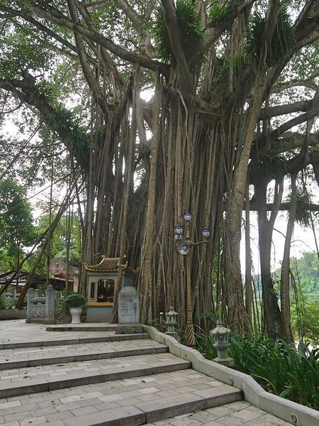 IMG_4447-heritage-tree.jpg