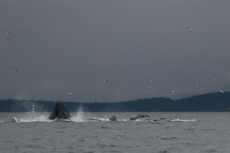 Alaska 2009-212.jpg