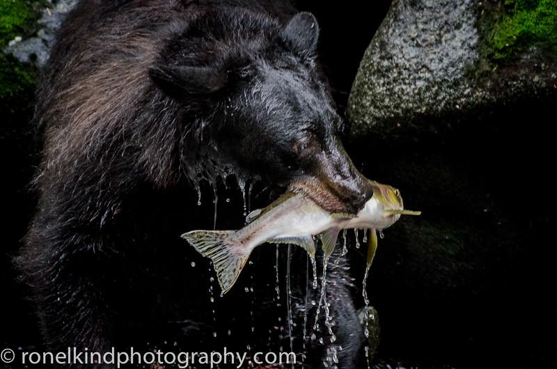 Fresh salmon for dinner.