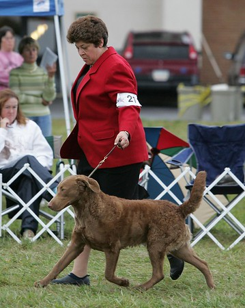 American Chesapeake Club 2005 National Specialty