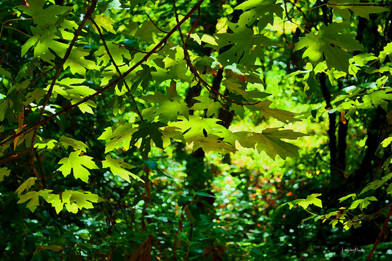 thicket 9-13-2011.jpg
