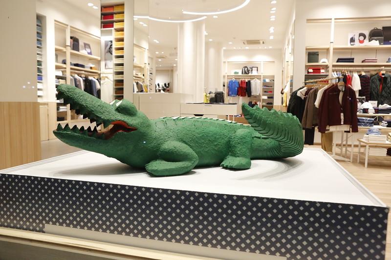 Gator in an upscale store window