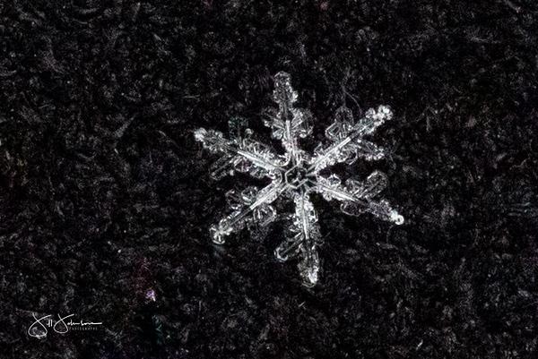 snowflakes-1203.jpg