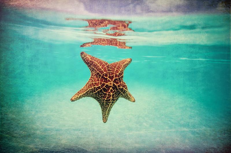 Bahama Fine Art Photography of Starfish