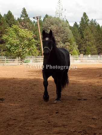 Cheryl Sproat 2014 Draft Horse Classic