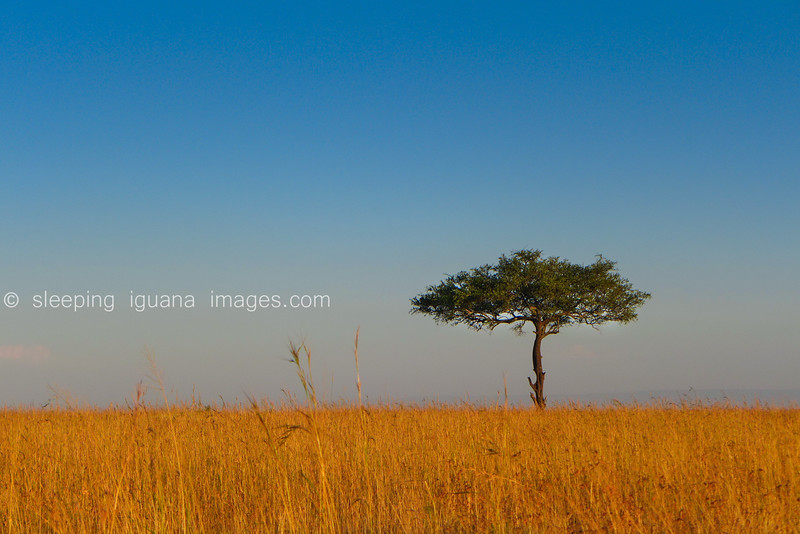 Uganda- Kenya 2013 (449 of 710)