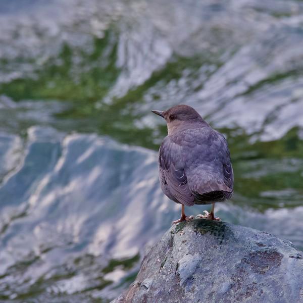 Stamp Falls Provincial Park, Port Alberni, BC
