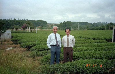 This a tea growing area in the countryside of Taipei.