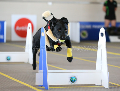 Flyball Nationals