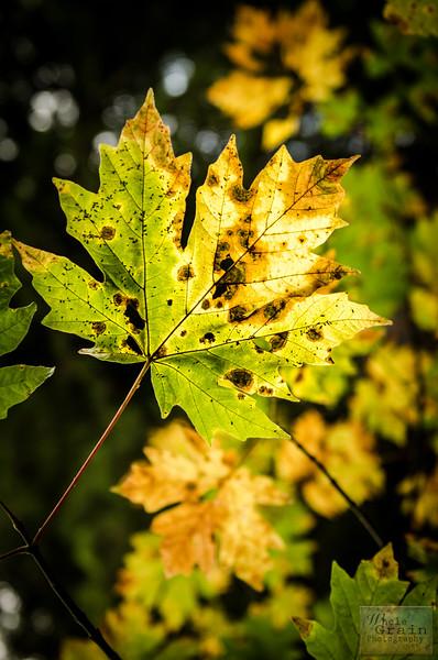 20141015_Redwoods_0078.jpg