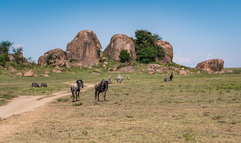 Tanzania_Feb_2018-509.jpg