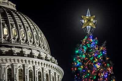 US Capitol Christmas Tree - 2016