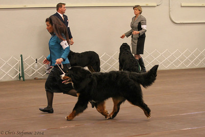 Sweeps 6-9 mos Dogs