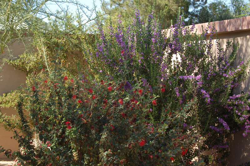 20120607_Scottsdale Back Yard_009.JPG