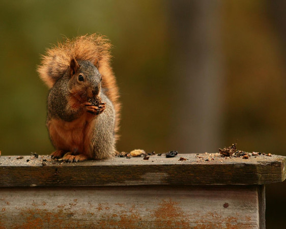 More squirrels in animals & birds gallery!