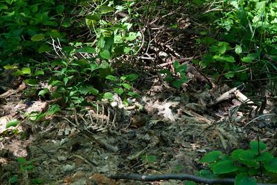 Tuscarora Creek Hamburg Rd litter May 2012