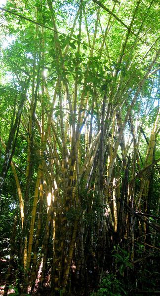 Costa Rica 08(2) 107a.jpg