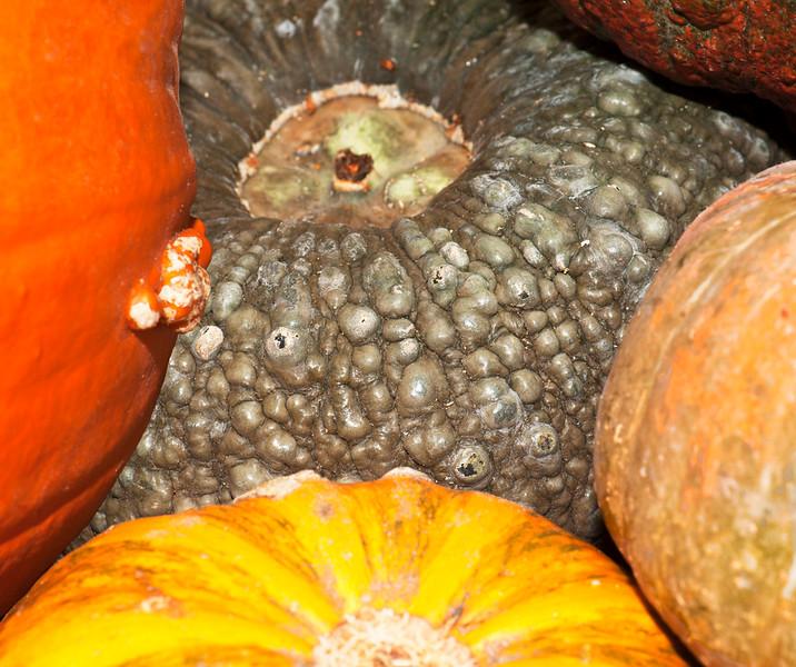 Pumpkins-14.jpg