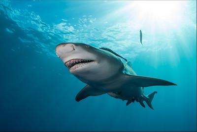 FL Sharks & Rays