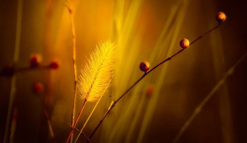 The Magic of Light-352.jpg