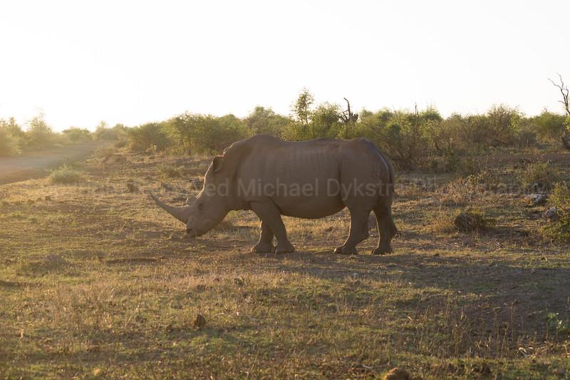 Madikwe-82.jpg