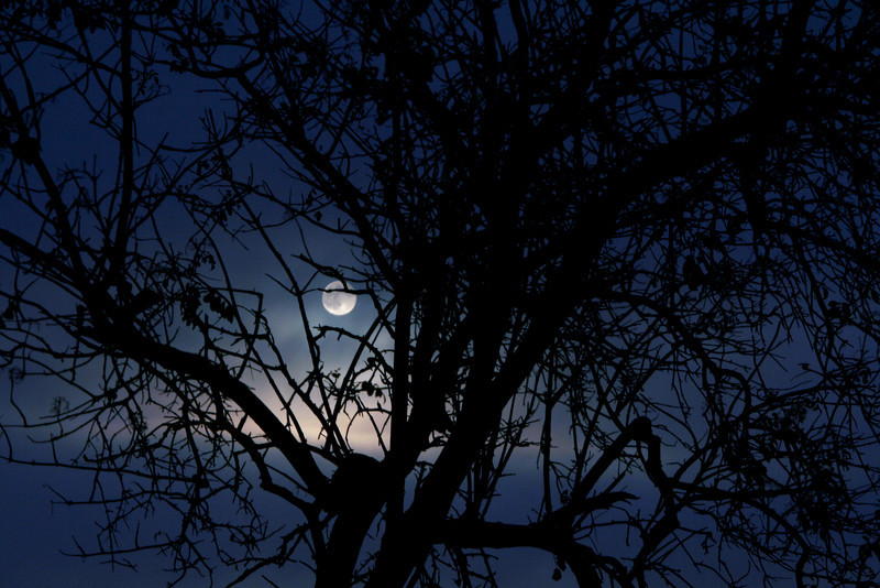 Moon and Tree Silhouette