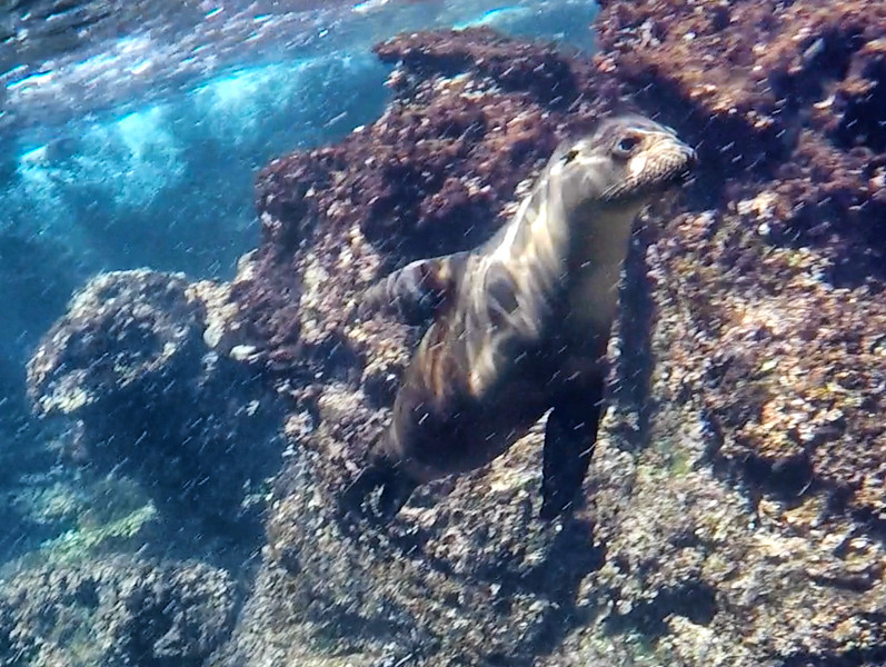 Sea Lion 6-2.jpg