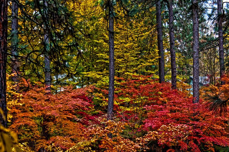Japanese_Gardens_HDR2.jpg