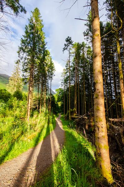 Woodland footpath in Glen Coe