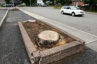 Photos: Property Owner Fined For Cutting Down Trees