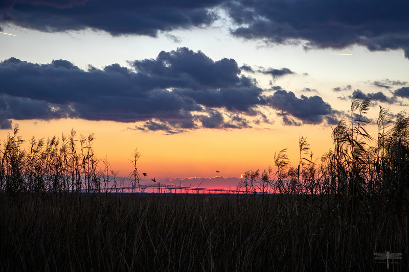 Sunset_Marsh_2019_Hawk club_664A0523.jpg