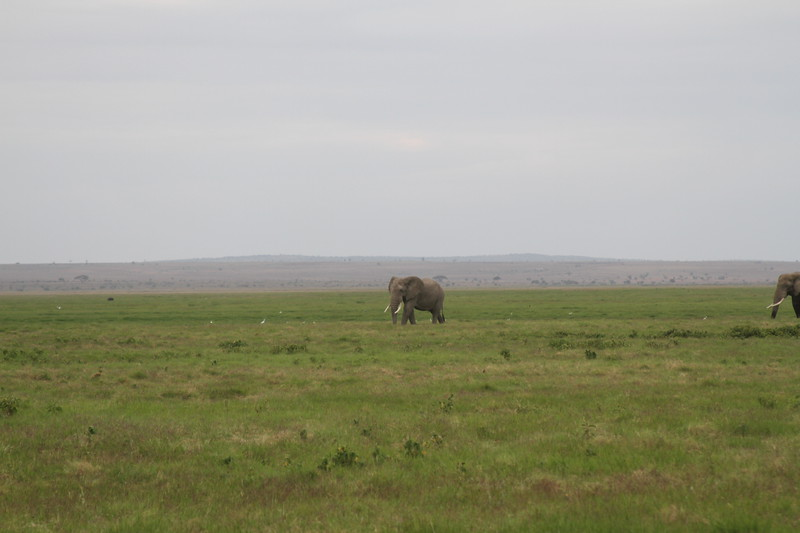 Kenya 2019 #2 1541.JPG