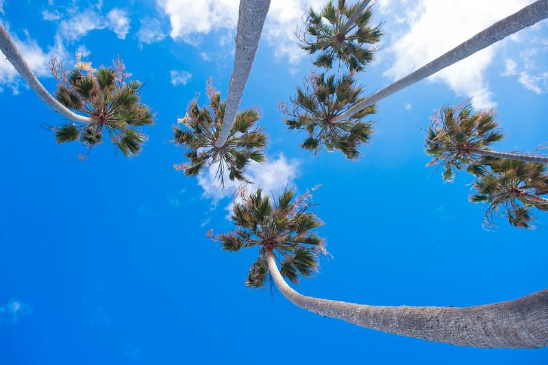 Palms at Torrey Pines