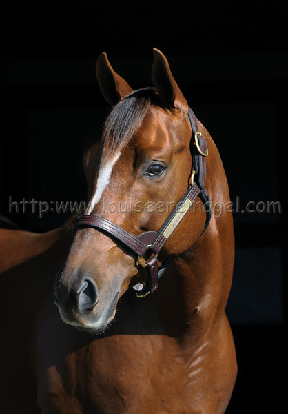 Showing Up Web Link:  http://adenastallions.com/stallions/stallion.aspx?id=Showing_Up