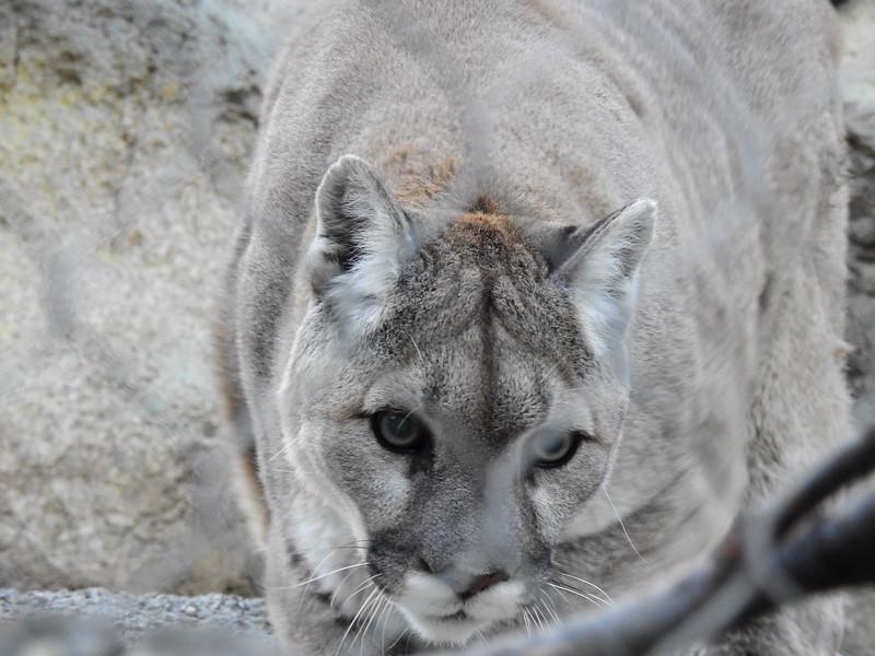 Cheyenne Mtn Zoo 2019 (1204).JPG