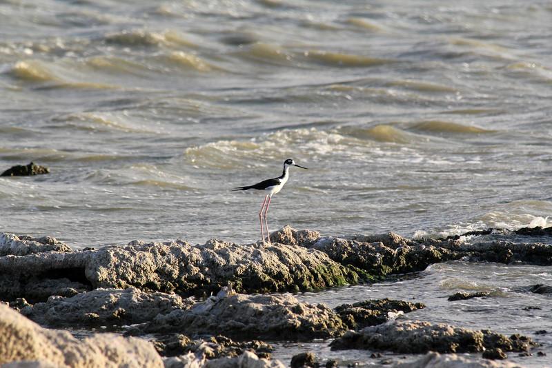 04 The Salton sea (68).JPG