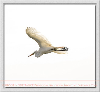 Great Egret in Art Deco Finest