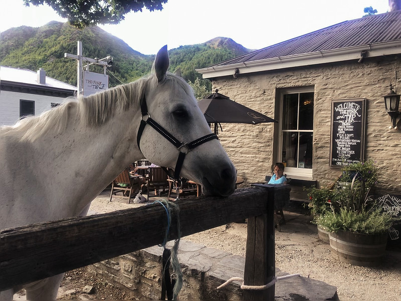 Horse outside the The Fork And Tap, Arrowtown, New Zealand