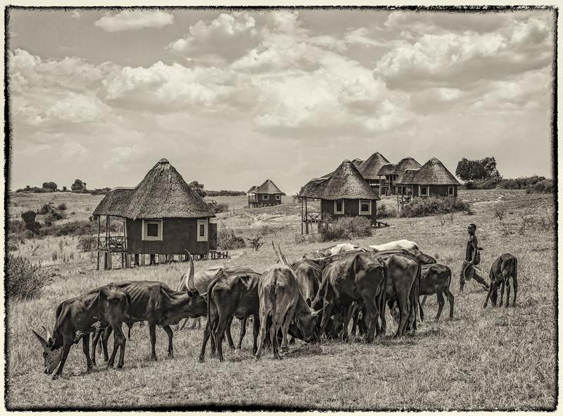 African_Apes_0218_PSokol-2620-Edit-Edit-2.jpg