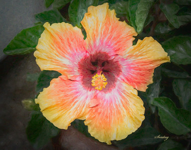Flowers Artwork - Hibiscus