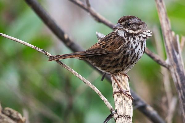 Audubon Annual Bird Count 2019 - ACR/Stinson