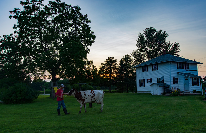 Walking-cow-sunset-osinga-farm-John.jpg