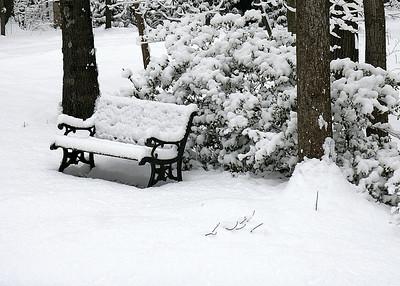 Snow feb. 3 2010