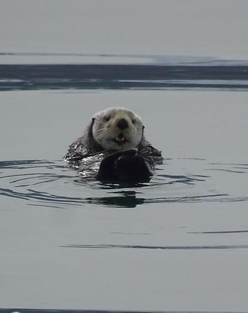 Asia-Alaska Expedition 2019: Seward