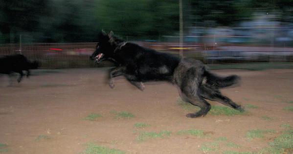 6 - 6 - 2010 Ayora Dog Park
