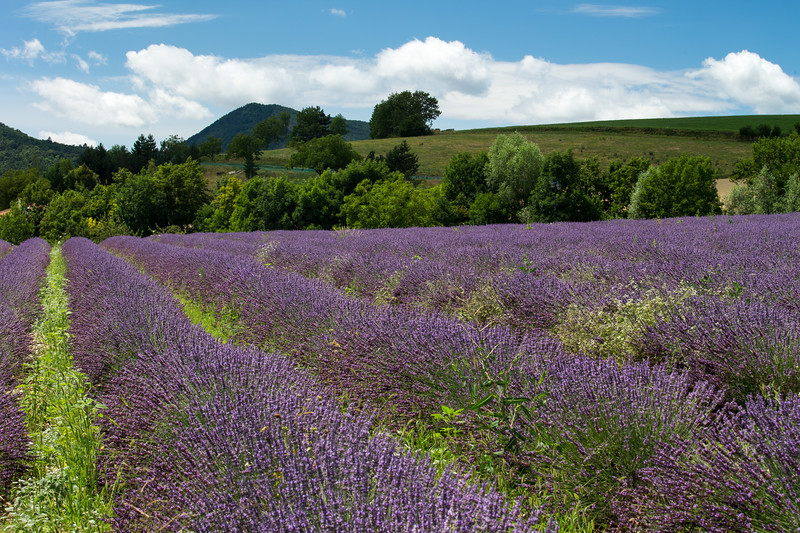 Provence- France - Jul 2013- 026.jpg