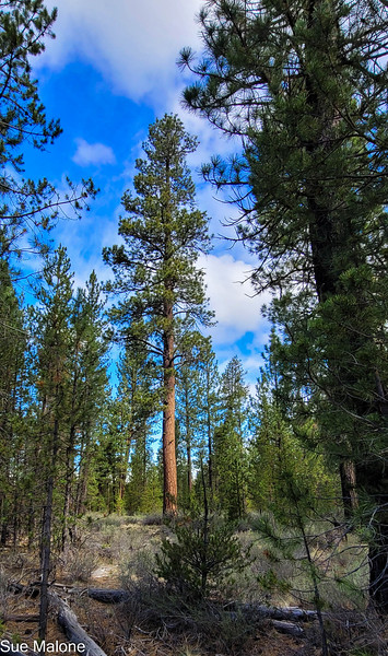 05-19-2021 La Pine State Park-24.jpg